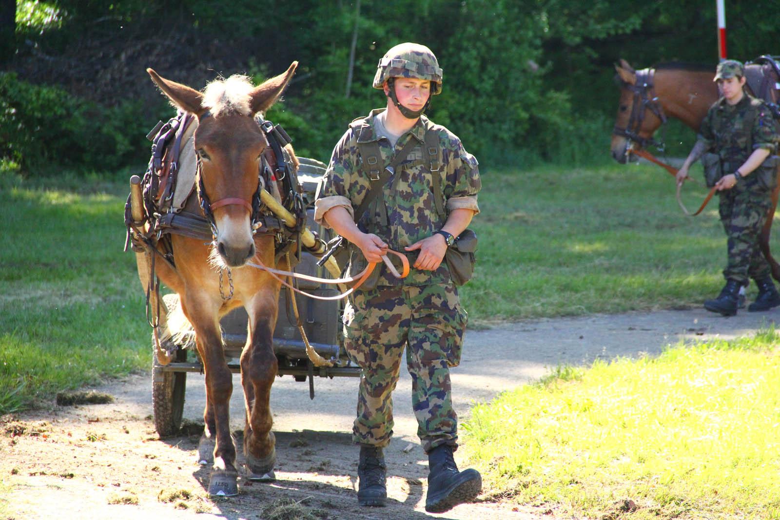 Armeepferde – Nationales Pferdezentrum Bern