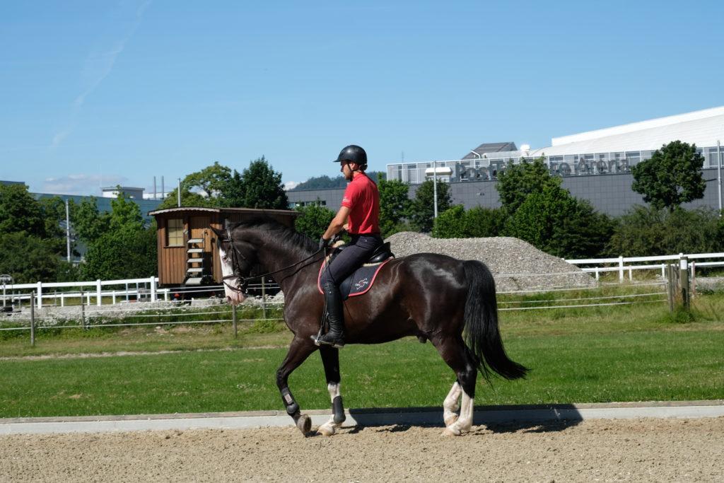 """Stipendium """"Nachwuchs für die Schweizer Pferdewelt"""""""